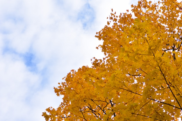 Autumn background divided by a cloudy blue sky and yellow tree leaves