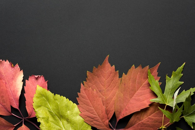 秋の背景。秋。黒の背景に色とりどりの紅葉。