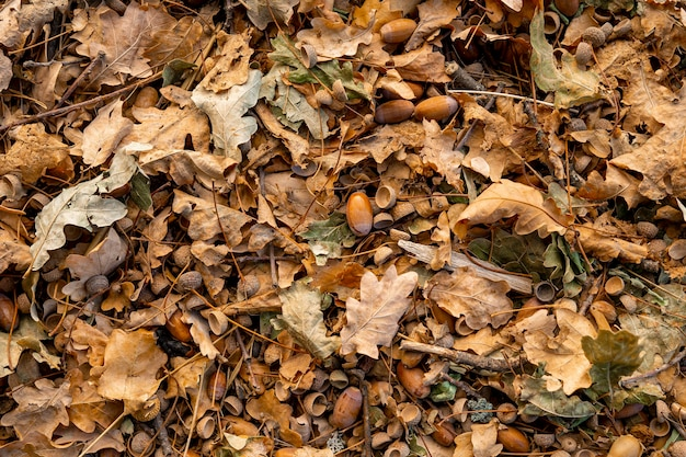 Autumn background, fallen oak leaves on the floor.