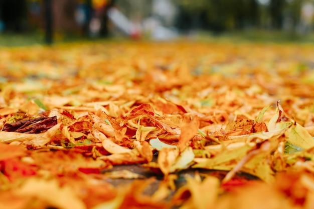 가을 배경, 보도에 떨어진 노란 잎, 안녕하세요 10월 컨셉입니다. 원근감, 낮은 각도 보기, 선택적 초점