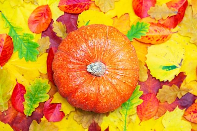 Осенний фон из красных, желтых и зеленых листьев. тыква. плоская планировка, копия пространства.
