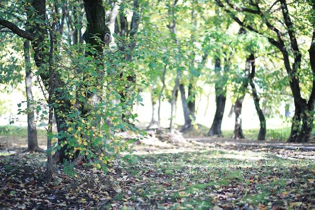 日中の公園の秋の背景