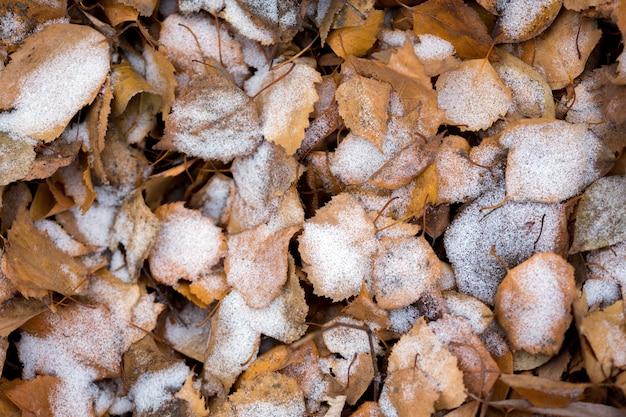 秋の背景、霜で覆われた葉