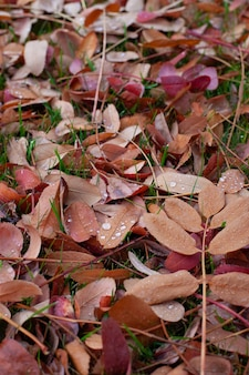 Autumn background of leaves fallen colorful leaves of trees lying on green grass with water drops fr...