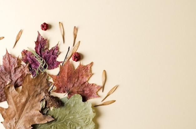秋の背景。ベージュの背景にオークとカエデの自然乾燥した紅葉