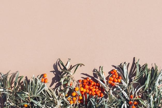 シーバックソーン秋の収穫抗酸化物質の葉とオレンジ色の果実の秋の背景