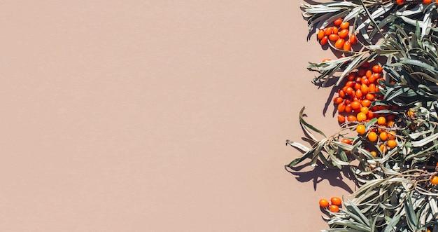 シーバックソーン収穫抗酸化ビタミンの葉とオレンジ色の果実の秋の背景