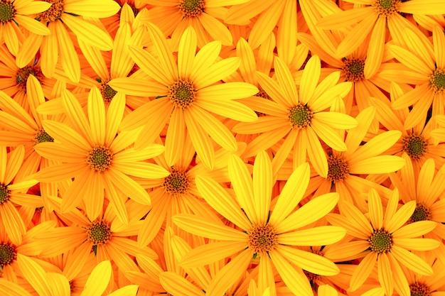エルサレムのアーティチョークの黄色い花の秋の背景