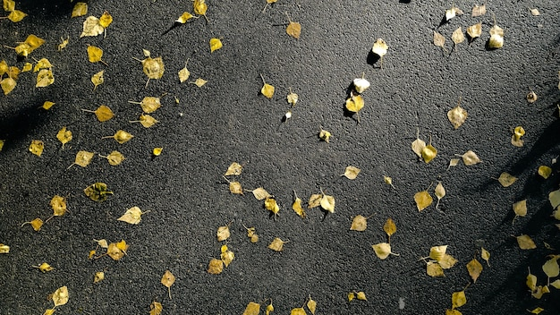 Осенний фон вид сверху. многие опавшие желтые листья на мокром асфальте после дождя, на открытом воздухе
