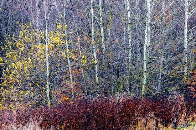 Осенний фон с разноцветными листьями в лесу