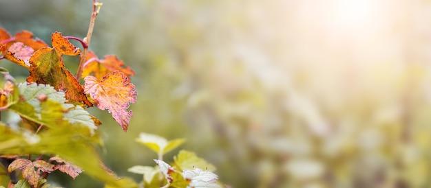 パステル カラー、パノラマ、コピー スペースでぼやけた背景にカラフルな葉と秋の背景