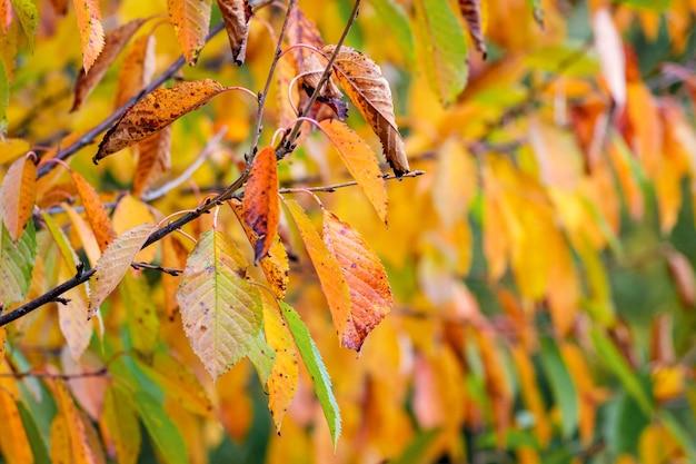 木に紅葉した秋の背景