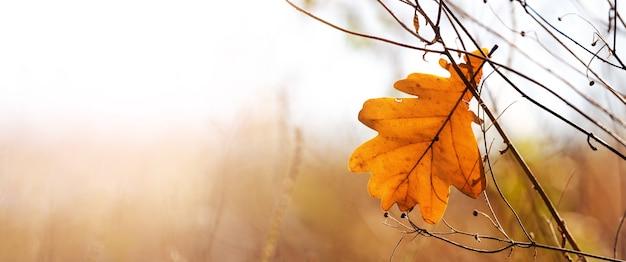 晴れた日の空を背景に乾燥したオークの葉と秋の背景、コピー スペース