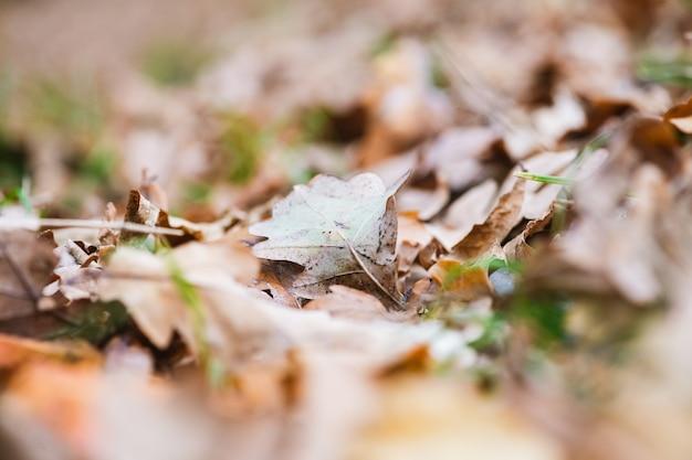 Осенний фон с сухой листвой деревьев, коричневыми и зелеными цветами и боке, узором осеннего сезона