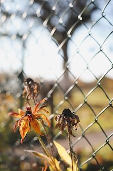 庭の花と秋の背景