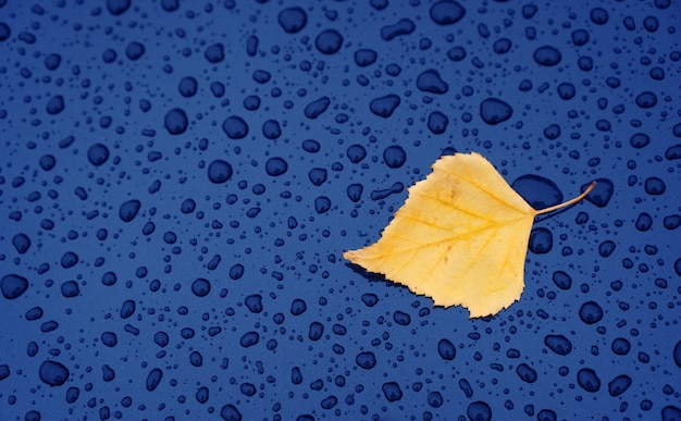 Autumn background with a leaf on the wet car hood