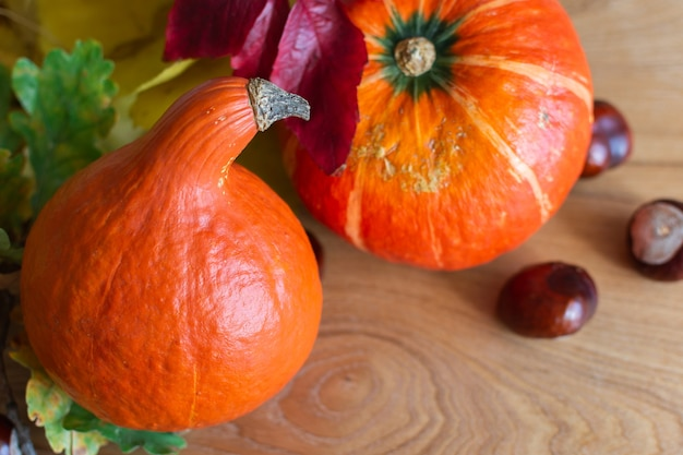 Autumn background with orange pumpkins and leaves of maple, oak and grape and chestnut fruits