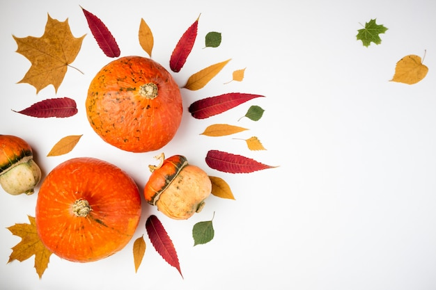 Autumn background with pumpkins and leaves on white