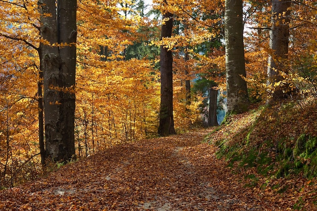 Autumn background with trees in the wood