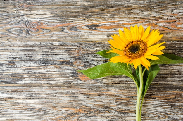 Autumn background with a yellow sunflower on vintage textured wooden table.