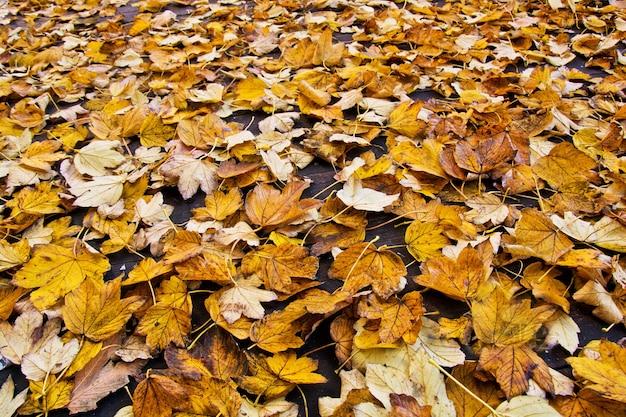 秋の背景。