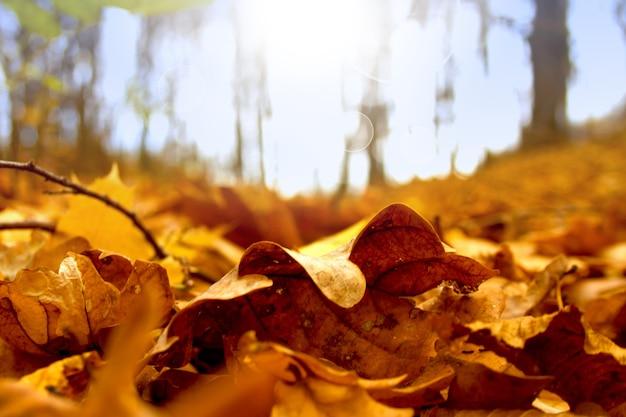 日当たりの良い森の背景に乾燥した落ちた黄色、オレンジ色の茶色の葉と秋の美しい風景。公園の色とりどりの金色の葉。葉の自然な背景