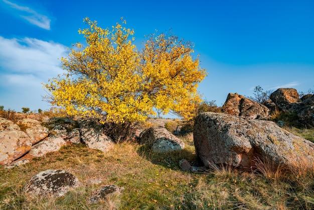 Осенью красивая пожелтевшая растительность и серые камни, покрытые разноцветными лишайниками и мхом на природе холмов и живописной украины.
