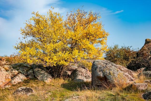 Осенью красивая пожелтевшая растительность и серые камни, покрытые разноцветными лишайниками и мхом