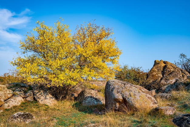 Autumn beautiful yellowed vegetation and gray stones covered with multi-colored lichen and moss in the nature of hills and picturesque ukraine