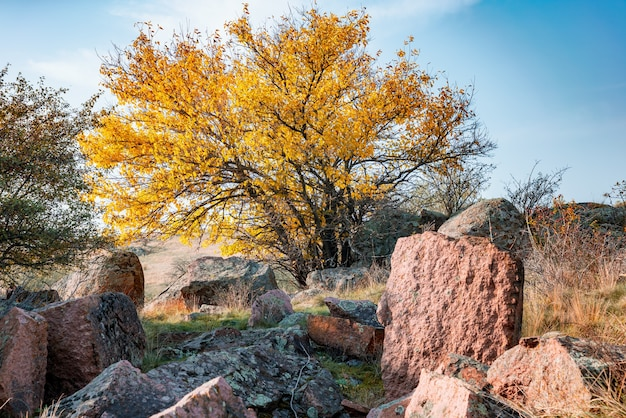 Autumn beautiful yellowed vegetation and gray stones covered with multicolored lichen and moss in the nature of the carpathian hills and picturesque ukraine