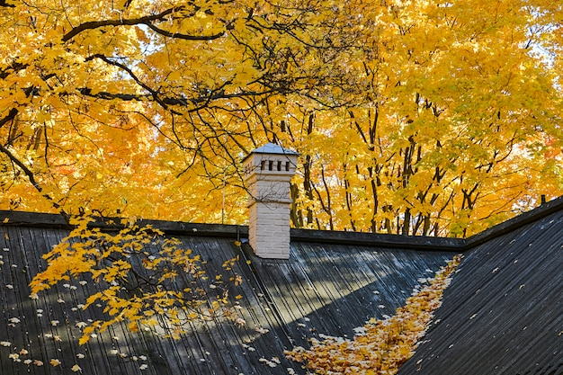 Autumn. black roof of a building with fallen yellow maple leaves and a white chimney