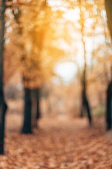 Осенний боке фон из природы леса не в фокусе расфокусированным естественное желтое дерево абстрактные natur ...