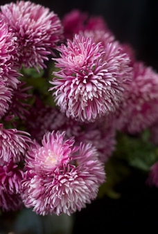 Autumn bouquet of lilac chrysanthemums on a dark