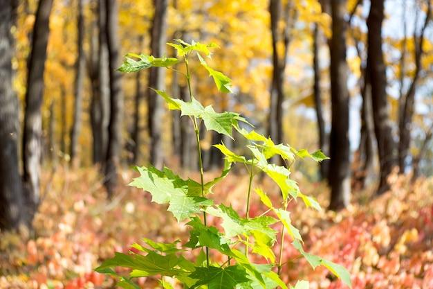 Осенняя ветка дерева