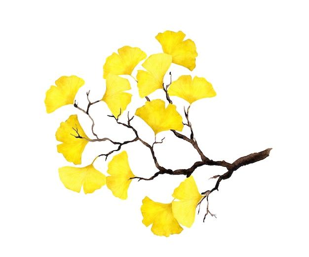 黄色のイチョウの葉と秋の枝。