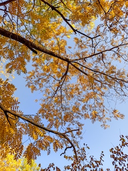 Autumn branches with leaves on a blue sky background
