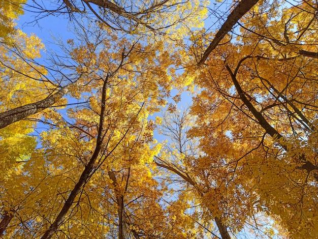 Осенние ветви с листьями на фоне голубого неба