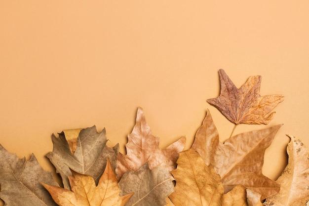 가을 갈색 갈색 배경에 평면도에 단풍