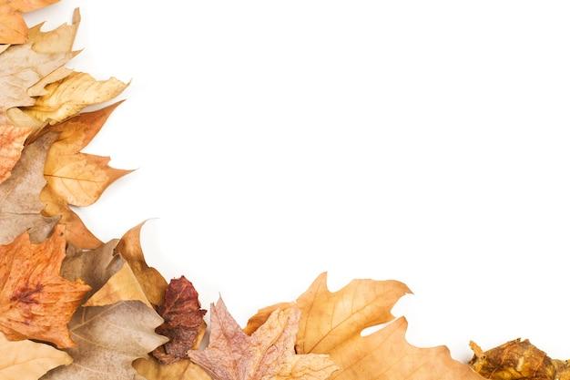 가을 갈색 흰색 배경에 평면도에 나뭇잎