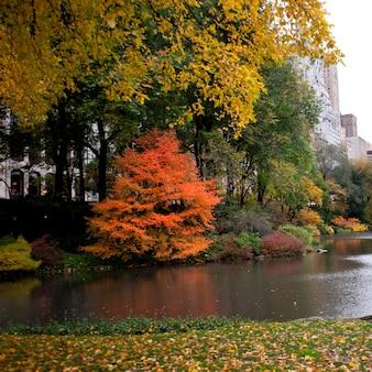 Autumn in central park  in manhattan, new york city, u.s.a.