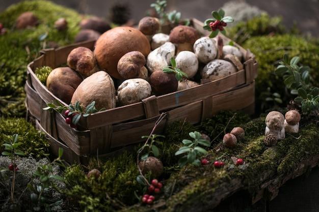 Осенние белые грибы. белые грибы boletus edulis
