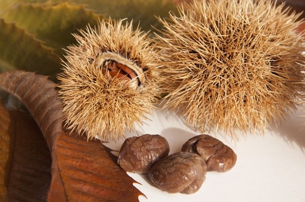 Autumn chestnuts delicious nature sweet