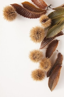Autumn chestnuts sweet delicious nature
