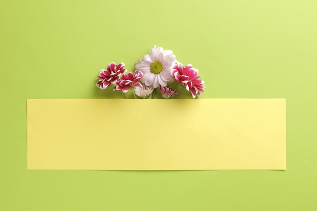 Autumn chrysanthemum flowers and a yellow blank for an inscription on a trendy green
