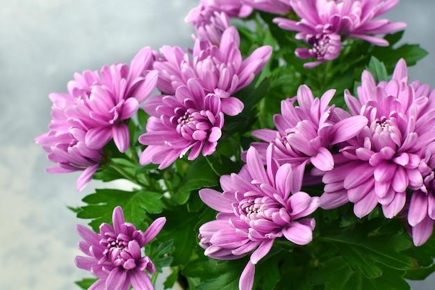 Осенние цветы хризантемы