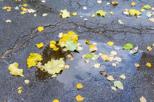 가을 도시 풍경 나무의 낙엽은 물 웅덩이에 아스팔트에 누워