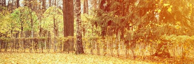 가을 도시 공원이나 숲, 가을 나무와 땅에 떨어진 노란 주황색 단풍. 배너. 플레어