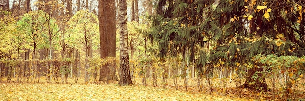 가을 도시 공원이나 숲, 가을 나무와 땅에 떨어진 노란 주황색 단풍. 배너
