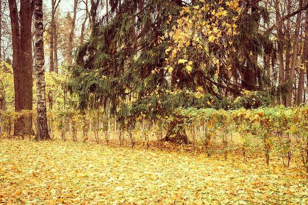 가을 도시 공원이나 숲, 가을 나무와 땅에 떨어진 노란 오렌지 단풍