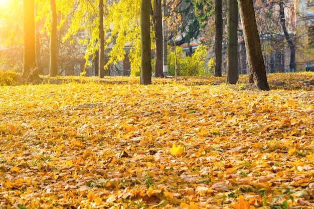 나무와 주황색 낙엽이 있는 가을 도시 공원